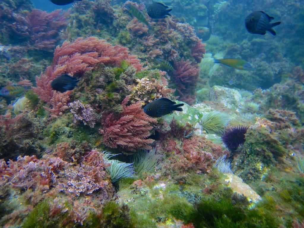 Biodiversity Habitats